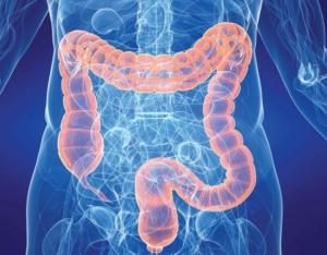 Gastro vyšetření - endoskopie, kolonoskopie: překlady lékařských zpráv, expresní kontakt MUDr Schwarz +420.